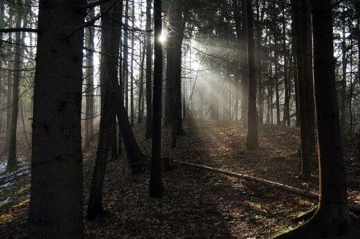 Zachowanie lasów na Litwie najlepsze na świecie