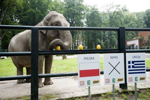 EURO 2012: Jak typują zwierzęta?