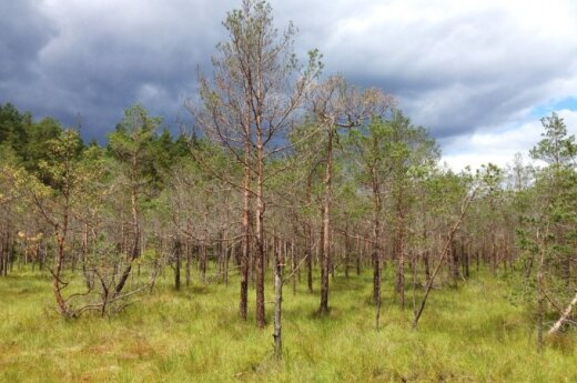 Puvėsiai miškui irgi reikalingi