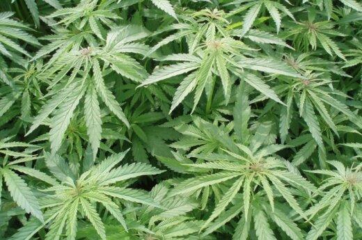 Prezydent podpisała Ustawę o legalizacji konopi