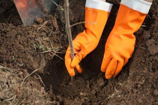 Kaip sukurti sodą nesunaikinant ekosistemos?