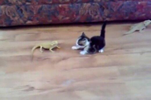 Kotek vs. jaszczurki